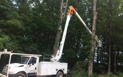 Tree Root Removal: A How to Guide