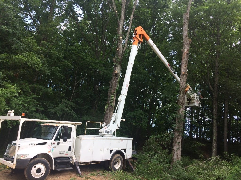 Tree Root Removal Services