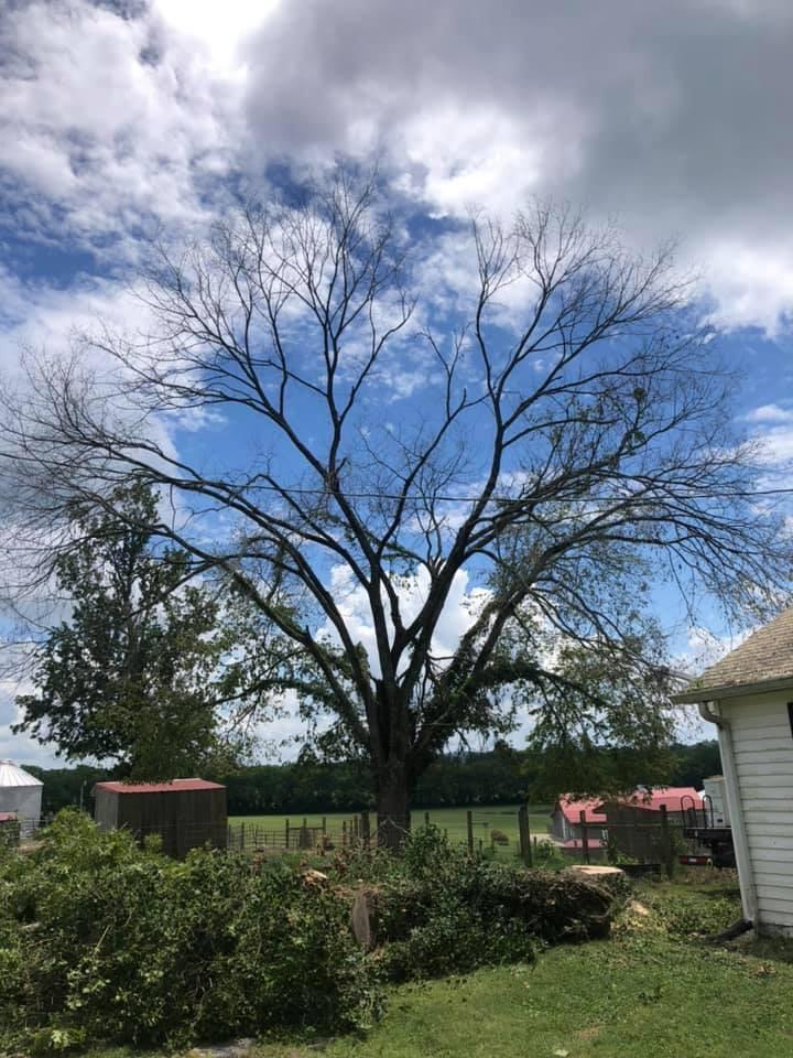 Tree Health Services