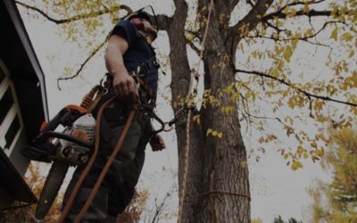 Tips & Techniques For Tree Trimming & Pruning Columbia, TN