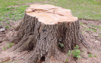 5 Signs You Need to Remove a Tree From Your Yard