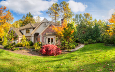 4 Tree Care Tips Every Homeowner Should Know