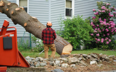 How to Get a Tree Removal Permit in Marshall County