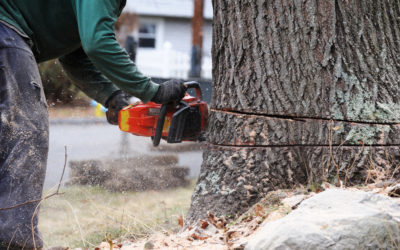How to Get a Tree Removal Permit in Lewisburg, Tennessee